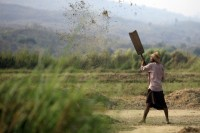 File photo of a rice farmer in Burma. (PHOTO: Reuters)
