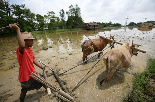 Agriculture: Burma must ease export laws to encourage FDI