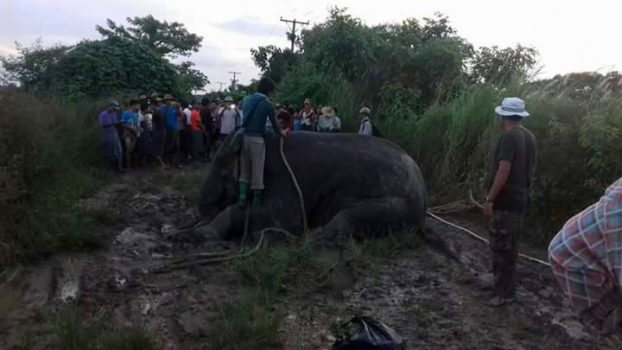 Lost elephant shot with tranquiliser