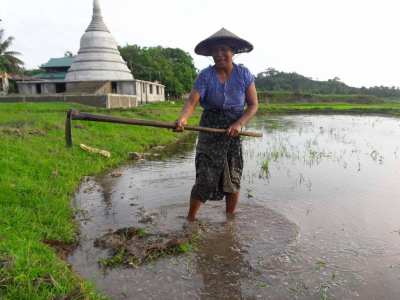 In Arakan State, ruined embankments prevent rice production