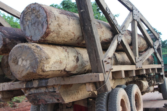 Soldiers nabbed with illegal logs in Sagaing
