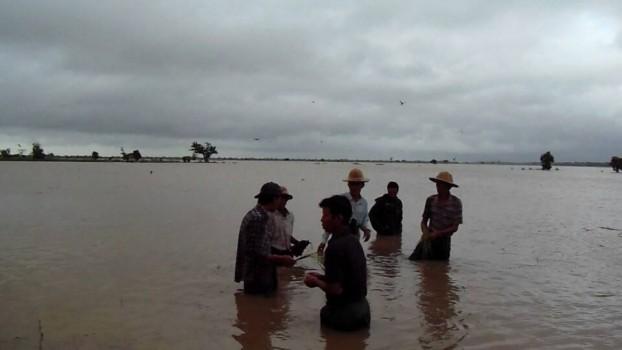 Pegu division's Gyobingauk town said over 3000 acres
