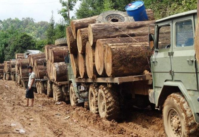 Burma army to assist in tackling illegal logging in Kachin