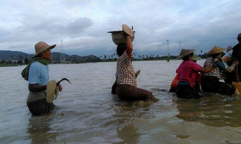 1,000 people evacuated in Latpadaung due to floods