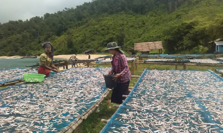 Logging exposé leads to threats against fishermen